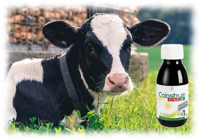 Bild mit einer Kuh und dem Produkt LR Costrum Direct zur Versinnbildlichung von Colostrum Erfahrungen.